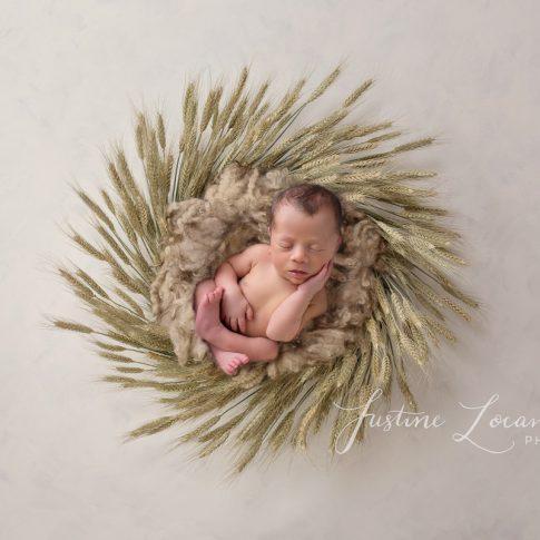Photograph of newborn baby boy in wheat basket taken by Ballarat newborn photographer Justine Locandro Photography