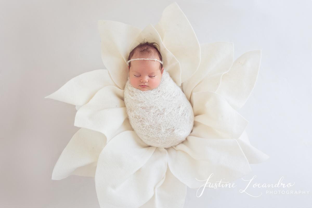 Newborn baby girl in white felted flower prop. Taken by Ballarat newborn photographer Justine Locandro Photography